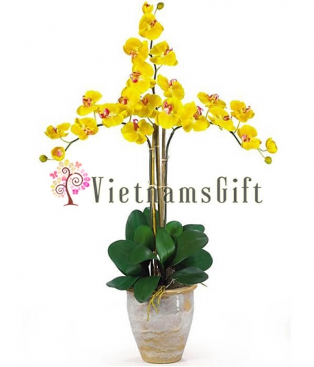 Orchid Plant 1